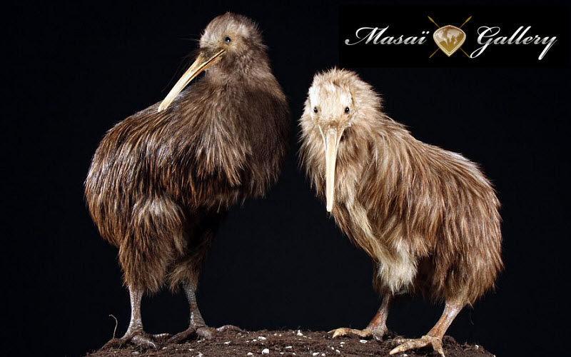 MASAI GALLERY Animal naturalisé Taxidermie et Trophées de chasse Ornements  |