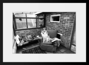 PHOTOBAY - guests in a doggie exclusive hotel - Photographie