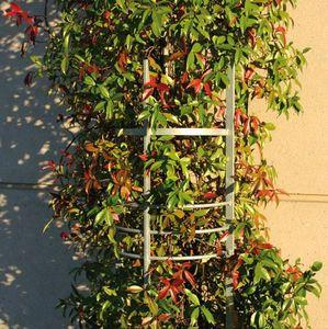Area -  - Corset D'arbre