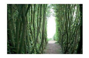 HUMUS Images de Jardin -  - Photographie