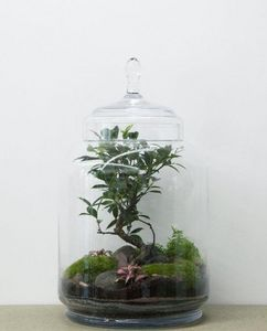 GREEN FACTORY - jungle jar - Terrarium Jardin Sous Cloche