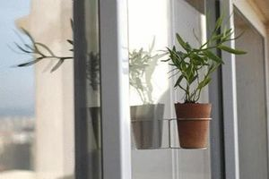 Adenium -  - Suspension Pot De Jardin