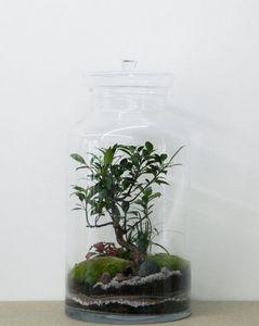 GREEN FACTORY - flat xl - Terrarium Jardin Sous Cloche
