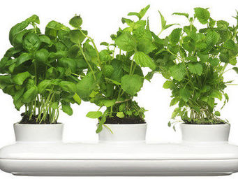 C'tendance - pot � herbes aromatiques triple - Potager D'int�rieur