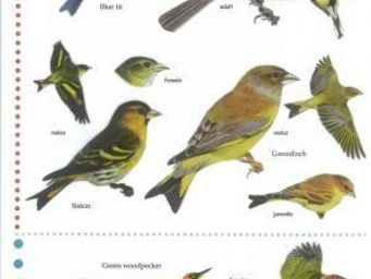 Wildlife world - field guide (birds) - Poster