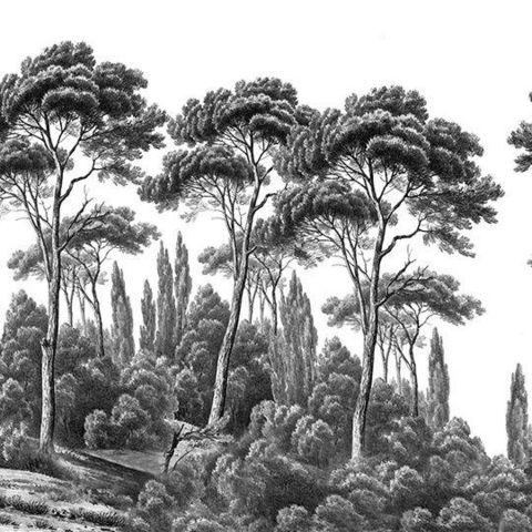 Ananbô - Papier peint panoramique-Ananbô-Pins et cyprès