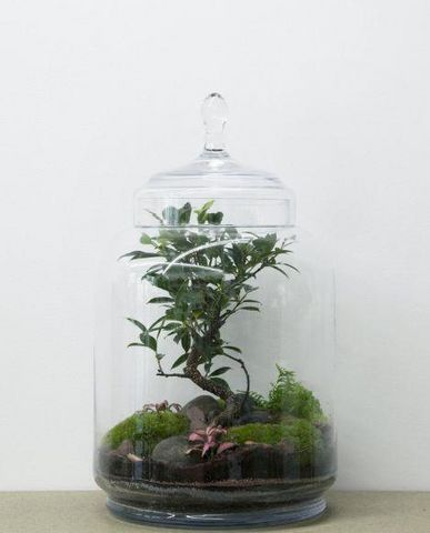 GREEN FACTORY - Terrarium Jardin sous cloche-GREEN FACTORY-JUNGLE JAR
