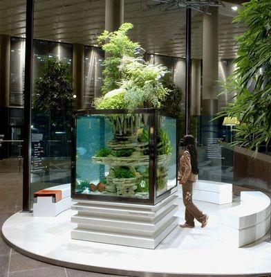 Atelier Paul Louis Duranton - Aquarium-Atelier Paul Louis Duranton-Posidonia