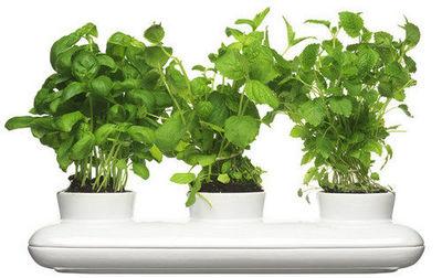 C'tendance - Potager d'intérieur-C'tendance-Pot à herbes aromatiques triple