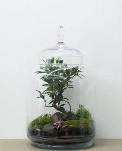 Terrarium Garden under glass-GREEN FACTORY-JUNGLE JAR