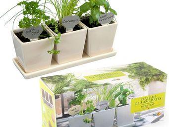 Radis Et Capucine - des aromatiques à faire pousser dans la cuisine - Interior Garden