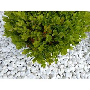 CLASSGARDEN - galet blanc pure calibre 12-24 mm - Pebble Flooring