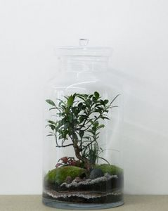 Terrarium Garden under glass