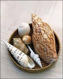 Warwick Fabrics -  - Shellfish