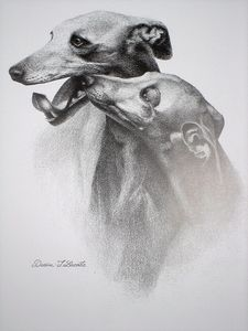 Partisans d'Arts - les whippets - Pencil Drawing