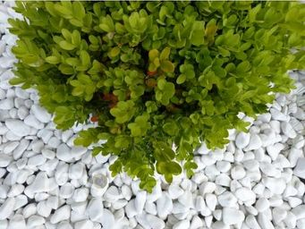 CLASSGARDEN - galet blanc pure pack de 7 m² calibre 12-24 mm - Pebble Flooring