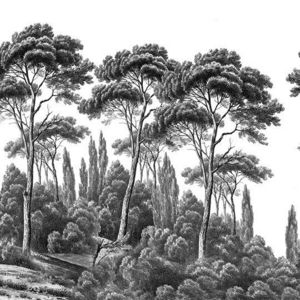 Ananbô - pins et cyprès noir et blanc - Panoramatapete
