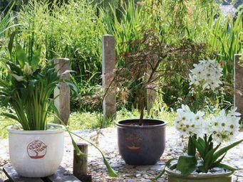 DEROMA France - kase - Blumenkübel