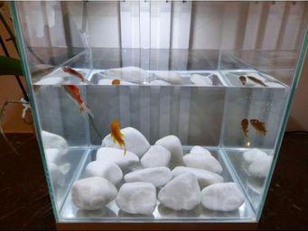 CLASSGARDEN - galet blanc aquarium 20-40 mm - Aquarium