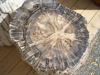 WILD-HERITAGE -  - Versteinertes Holz