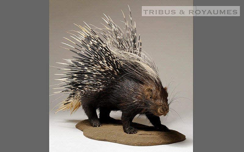 TRIBUS & ROYAUMES animal disecado Taxidermia y trofeos de caza Ornamentos  |