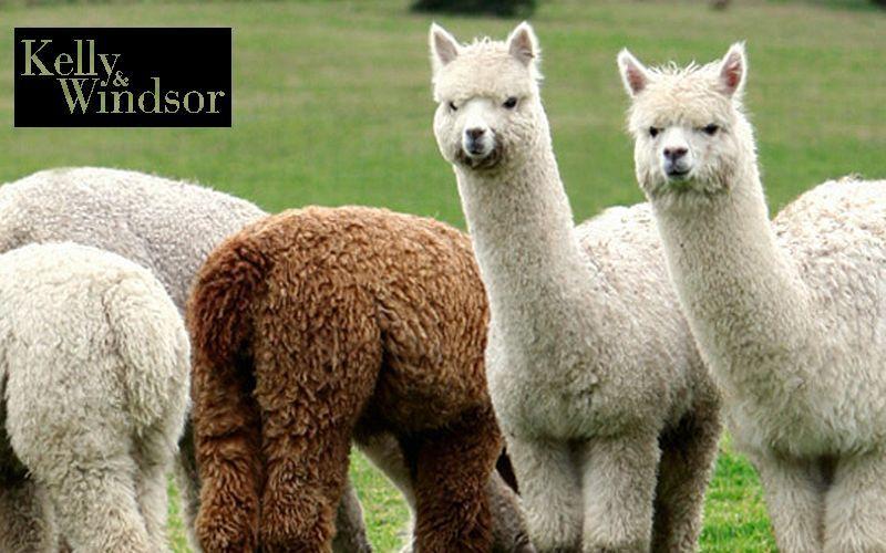 KELLY AND WINDSOR Alpaca Tessuti d'arredo Tessuti Tende Passamaneria  |