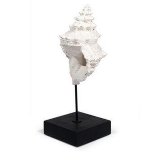 MAISONS DU MONDE - statuette coquillage museum - Figurina