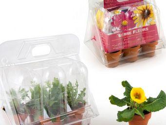 Radis Et Capucine - mini-serre pour les semis de fleurs - Giardino Per Interni