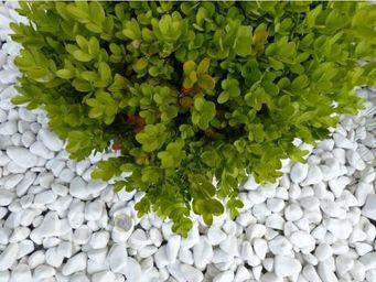 CLASSGARDEN - galet blanc pure pack de 7 m² calibre 12-24 mm - Ciottolato / Pavimento In Ciottoli
